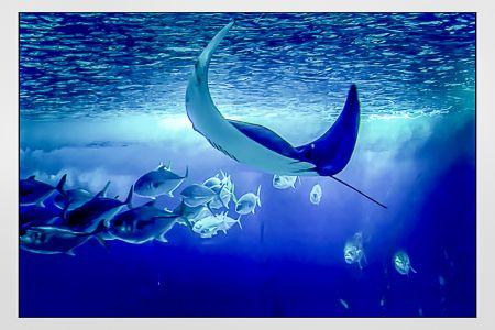 019-Azul Da Cor Do Mar